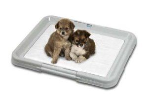 puppy-toilet-training