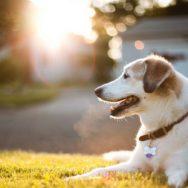 Kutya eledelek és játékok, kiegészítők kutyáknak