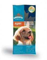 chicopee_puppy