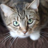 Macska eledelek, Cica játékok és kiegészítők